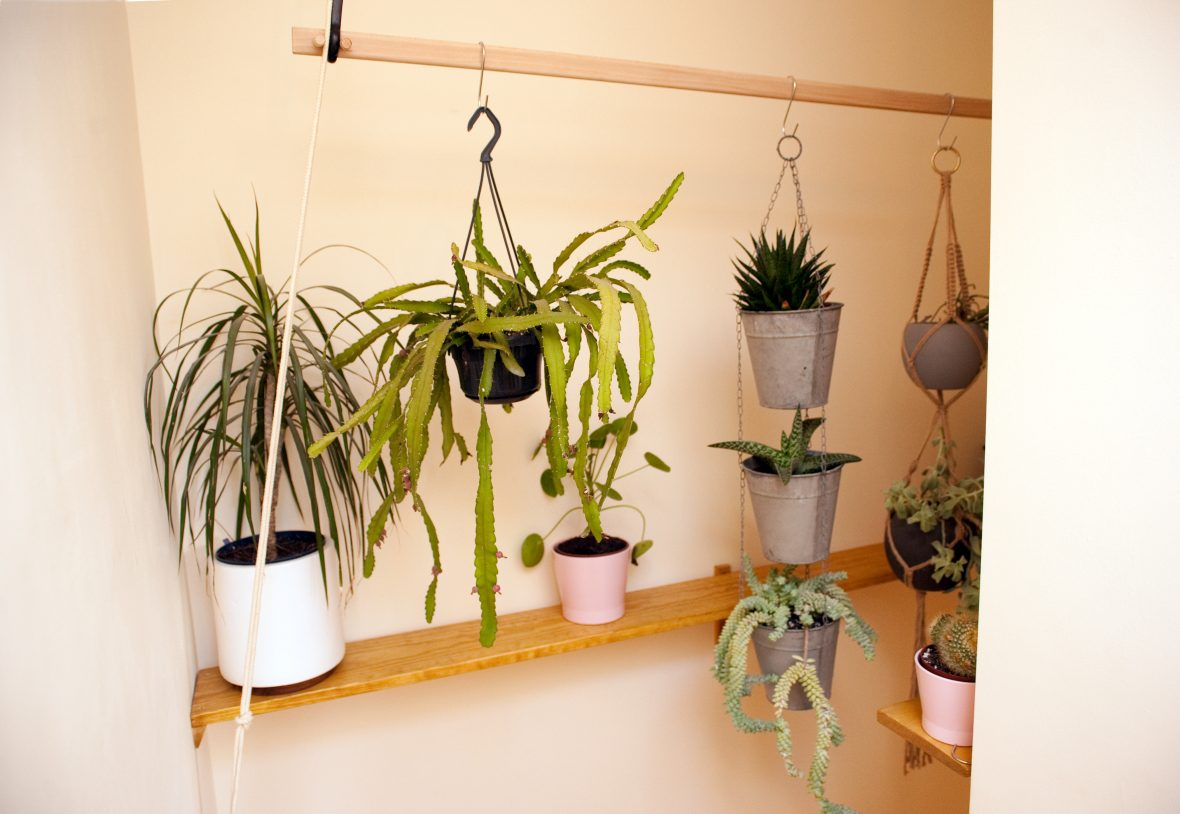 Adapted Victorian clothes dryer to allow display of plants - it can be raised and lowered for watering.