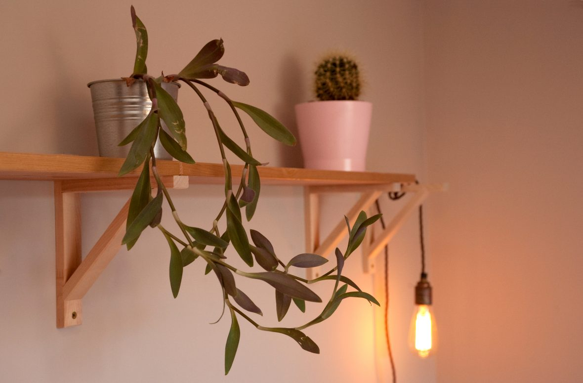 Custom shelving allowed client to display prized plant collection.